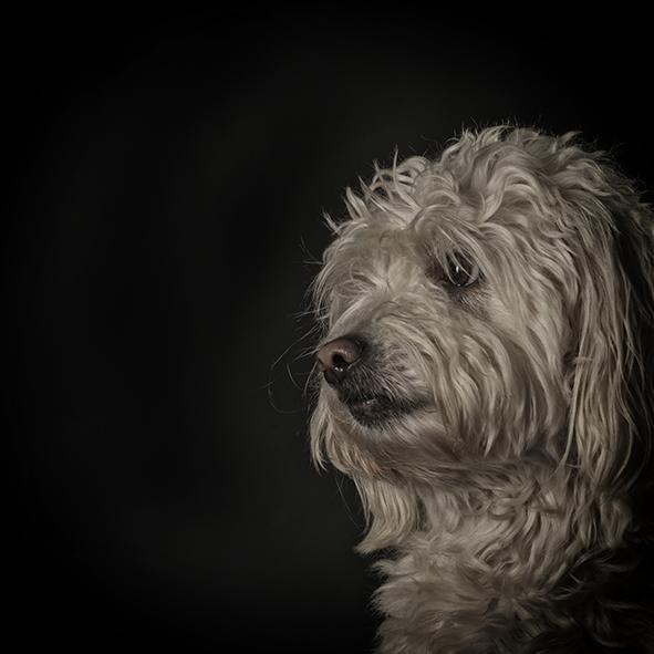 Dieren | Marjolijn Lamme Fotografie