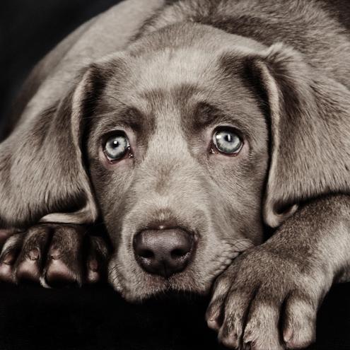 Dierenfotografie portfolio | Marjolijn Lamme Fotografie
