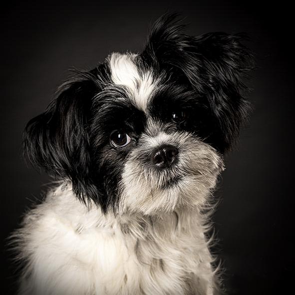 Honden Portret